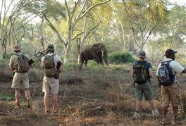 Eco Quests African Wilderness Trip